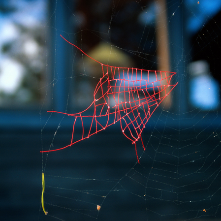 Mended spiderweb #8 Fish patch, Nina Katchadourian